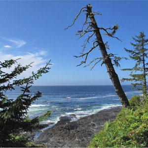 Botanical Beach near Port Renfrew